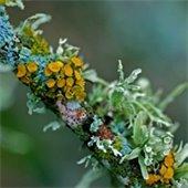 Mosses, Fungi, and Lichen